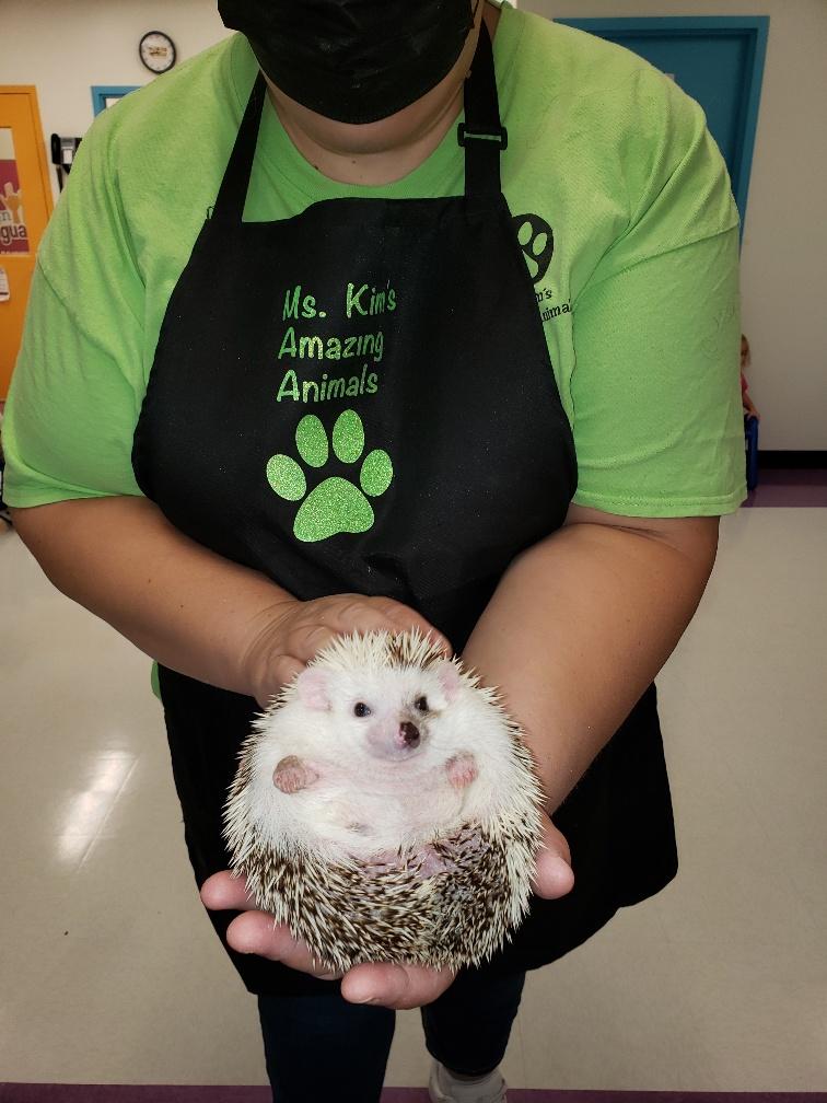 Miss Kim's Amazing Animals